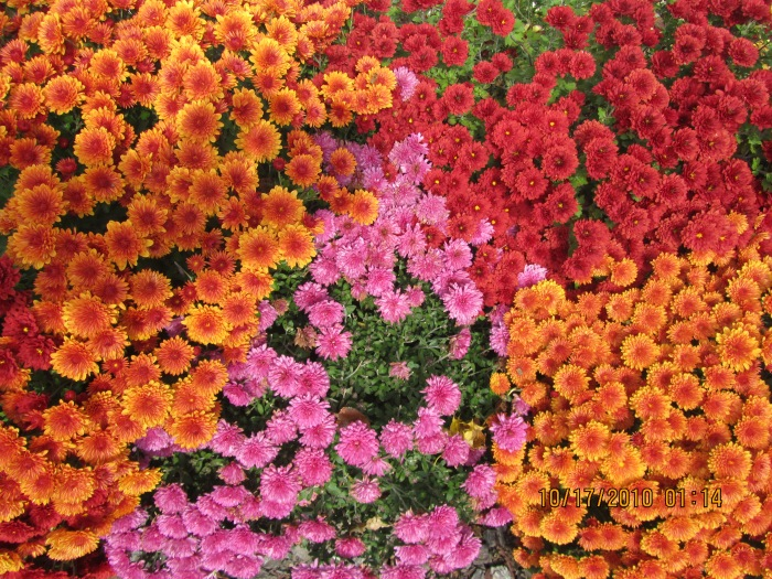 Beautiful Mums (2)