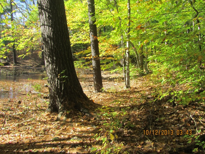Autumn Colors galore. Time to start raking!